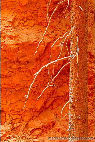 Abstract photograph showing snow coating the branches of a dead snag at the bottom of a sandstone canyon