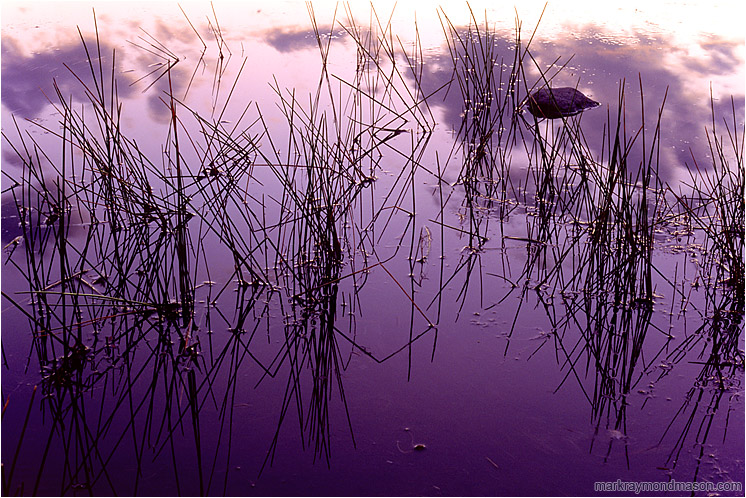 Calm Water, Clouds: Near Princeton, BC, Canada (2005) - Fine art photograph of rocks, reeds and reflections in a calm pond