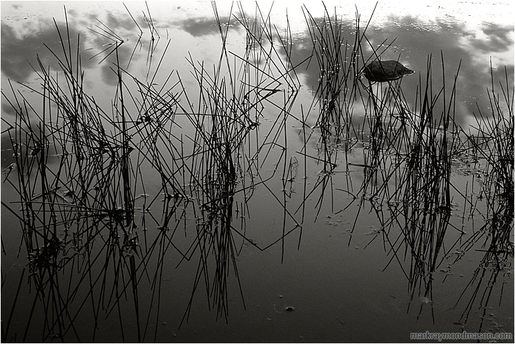 Calm Water, Clouds (B&W): Near Princeton, BC, Canada (2005) - Fine art black and white abstract photograph of features and reflections in the calm water of a pond after sunset