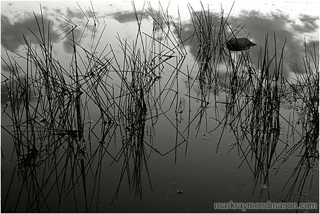 Fine art black and white abstract photograph of features and reflections in the calm water of a pond after sunset