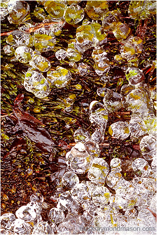 Abstract photograph showing tiny globes of ice clinging to bright green moss and leaves