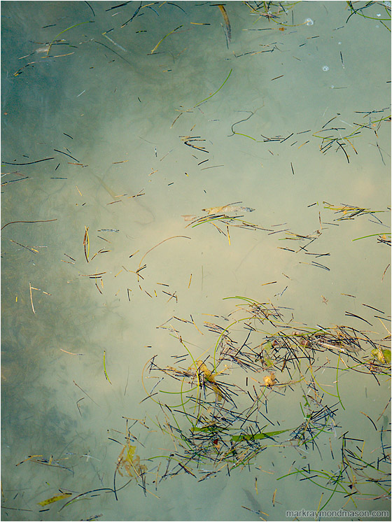 Seagrass, Cloudy Water: Caye Caulker, Belize (2010-04-30) - Abstract photograph showing pieces of seagrass floating on translucent green ocean water