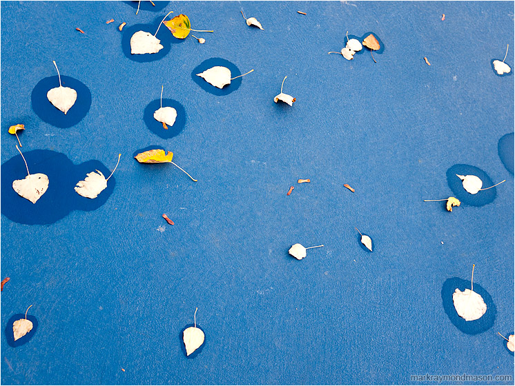 Scattered Leaves, Seeping Water: Kamloops, BC, Canada (2011) - Fine art photograph showing leaves and water stains scattered on a deep blue tennis court