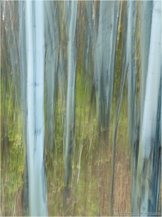 Painted Forest, Brambles: Near Kamloops, BC, Canada (2011) - Abstract photograph of a motion-blurred forest, with lines and texture where the camera paused