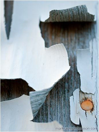Abstract photo of a small red nail amid large curls of thick white paint and a dry, grey board