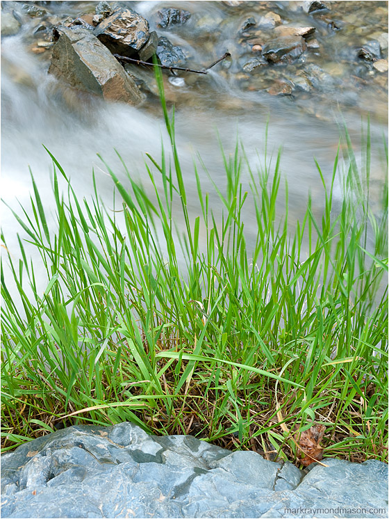 Fresh Grasses, Rocky River: Kamloops, BC, Canada (2012-06-16) - Fine art photograph of green grasses layered against flowing water, boulders, and angled river rocks