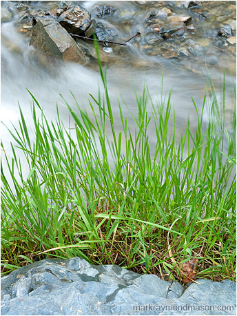 Fine art photograph of green grasses layered against flowing water, boulders, and angled river rocks