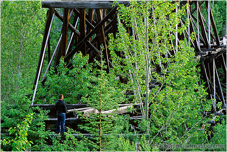 Lifestyle photograph of a man standing on the crossbeams of an aging wooden train bridge amidst aspens and fir trees