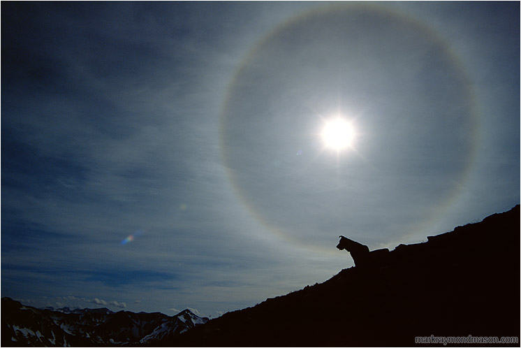 Sundog: Stein Wilderness, BC, Canada (2002) - Lifestyle photo showing the silhouette of a dog against a dramatic solar halo and distant mountain ranges