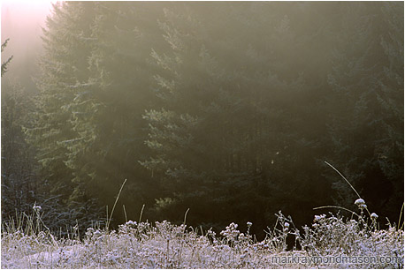 Fine art photograph showing frosty grass and mist and a forest background