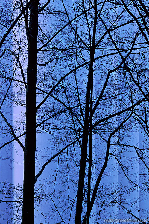Dark Trees, Silo: Vancouver, BC, Canada (2004-00-00) - Abstract photograph showing tree branches silhouetted against blue concrete grain silos