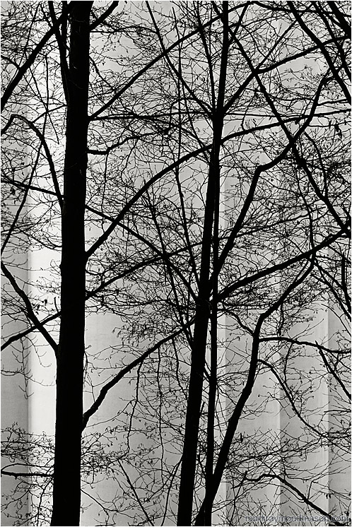 Dark Trees, Silo (B&W): Vancouver, BC, Canada (2004) - Abstract black and white photograph of black tree branches against the rigid, stacked lines of a grain silo