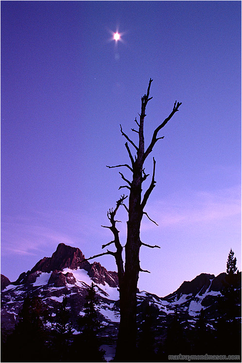 Snag, Mountains, Moon: High Sierras, CA, USA (2001) - Fine art nature photograph of a brilliant moon above the outline of an old snag with mountains and forests in the backgound
