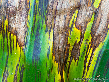 Abstract photograph showing streaks, colours and texture in a dying blighted palm leaf