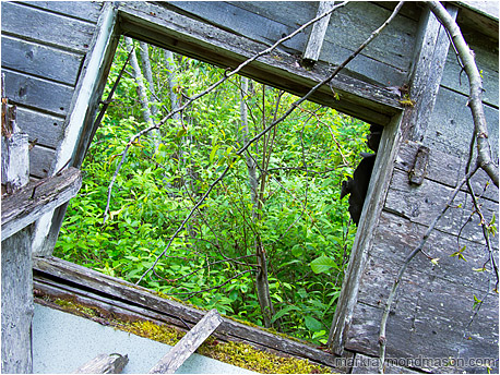 Fine art photograph of a view through a dilapidated, tilted cabin wall to a lush, leafy forest