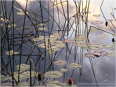 Fine art photograph of lily pads, reeds, and calm water reflecting a warmly coloured mountain sunset