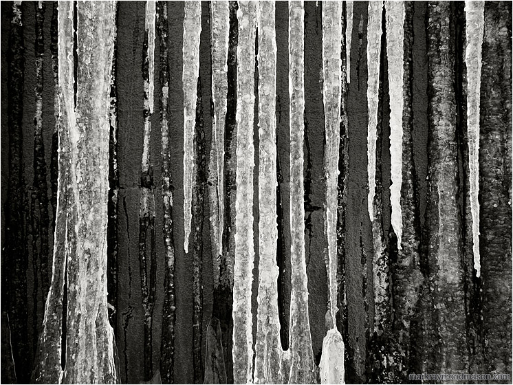 Dark Concrete, Ice: Salmon Arm, BC, Canada (2017) - Fine art black and white photo of white icicles flowing down a dark, charcoal coloured concrete wall
