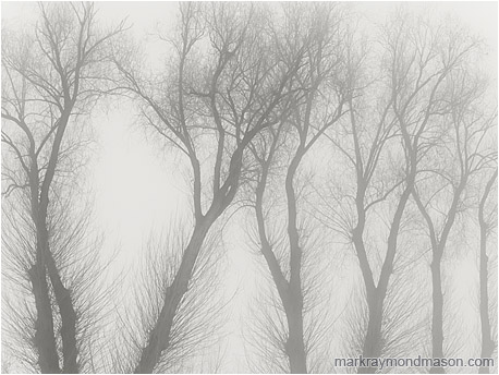 Black and white fine art photograph of tree skeletons, bare of leaves, grey and lifeless against a dull and foggy sky