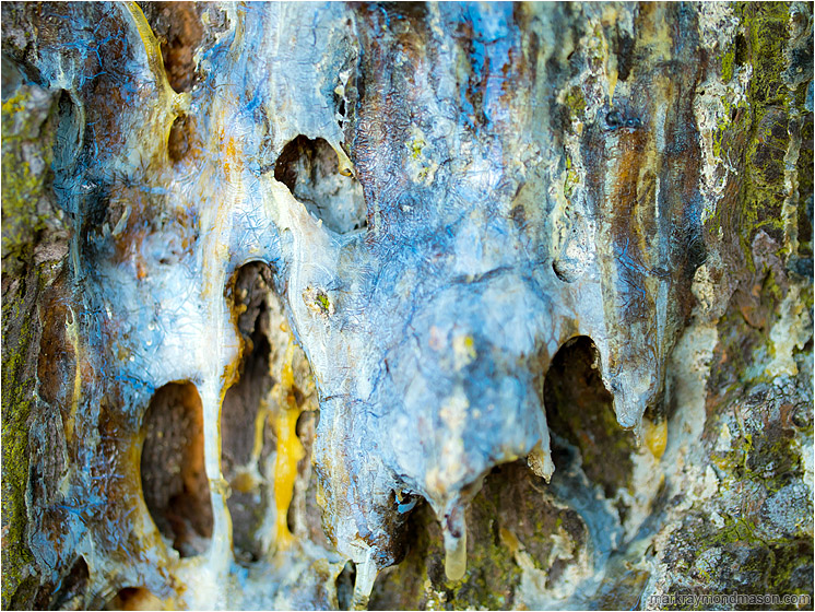Tree Bark, Hardened Sap: Near Salmon Arm, BC, Canada (2017) - Fine art macro photograph showing textures and colours in a mass of hardened pine sap