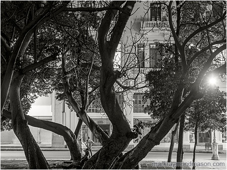 Fine art black and white photograph showing men on the street at night beneath the straight concrete walls and intertwined branches of downtown Havana