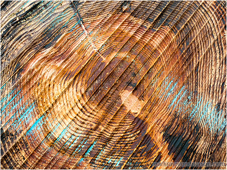 Fine art abstract photograph juxtaposing the end grain, saw marks, and chalk colouring on the cut end of a large driftwood log
