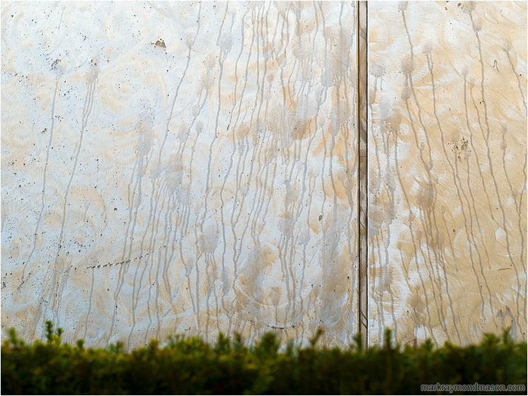 Streaked Metal, Hedge: Vancouver, BC, Canada (2018-01-26) - Fine art photograph of stains and streaks on a stainless steel wall plate, with an out-of-focus hedge in the foreground